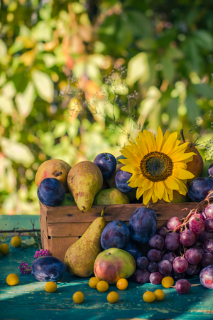 late summer: Garden in late summer: Seasonal fruits in a basket in the light of the setting sun