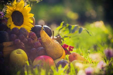 Autumn in the orchard: fruit crops in the grass at sunset