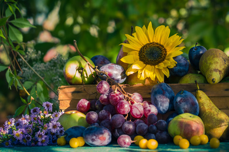 grape fruit: Garden in late summer: Seasonal fruits in a basket in the light of the setting sun