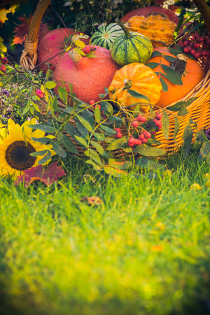 leaves green: Gifts of autumn in the garden: pumpkins in a basket on the grass Stock Photo