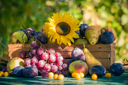 Garden in late summer: Seasonal fruits in a basket in the light of the setting sun