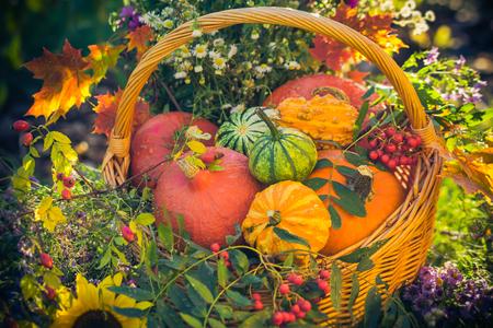 Colorful pumpkins in basket: Autumn in the garden Imagens