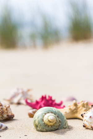 Colorful sea shells on the sandy beach.