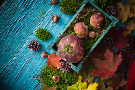 Autumn forest composition with mushrooms in a basket