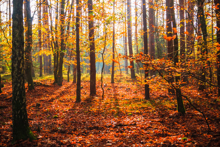 Autumn in the forest: trees in colorful leaves Standard-Bild