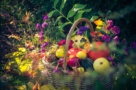Autumn harvest: a basket filled with fruit in the garden