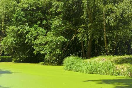 pedicel: green lake