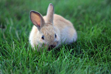 ウサギの草の上