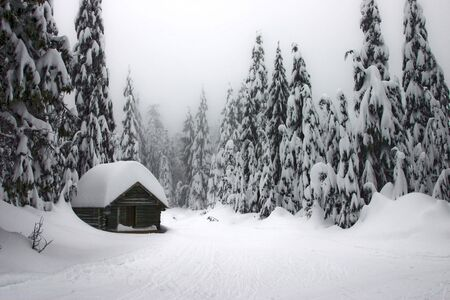 A shack in the middle of the woods during winter time photo