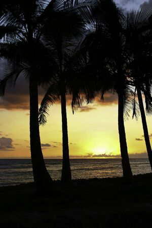 Unforgettable sunset in the tropics viewed thru the palm trees Stock Photo - 5340182
