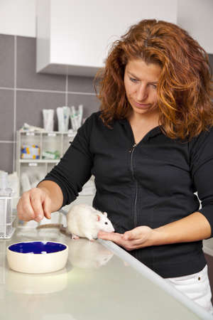 A beautiful woman in her thirties feeding a domestic rat on an operating table at a veterinarian photo