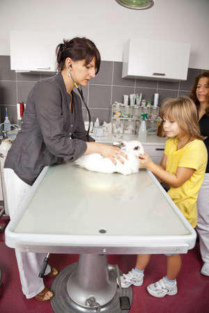 A white domestic rabbit being examined at a veterinarian photo