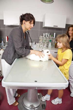 Ein weißes Kaninchen wird bei inländischen einem Tierarzt untersucht