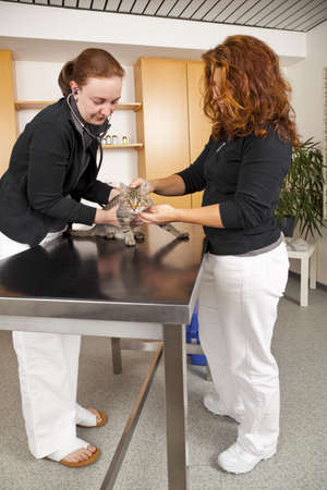 a domestic cat being examined at a veterinarian photo
