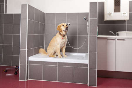 A dog sitting in the animals shower at a veterinarian Stock Photo