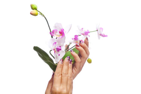 A beauty concept - hands with acrylic fingernails holding flowers, shot on white studio background Stock Photo - 12136349
