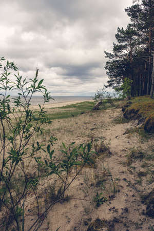 Sand Dunes and forest on the shore of the Baltic sea