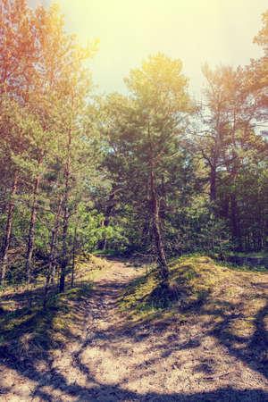 Forest landscape. Morning in the forest. Retro vintage hipster toned color.