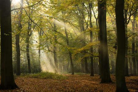 Sunbeams between the trees in wood Stock Photo