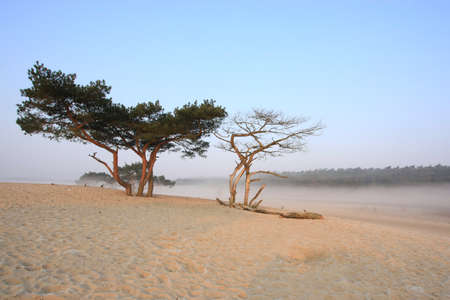 misty morning in the middle of the dunes