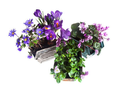 springplants in pink, blue and rose in metal containers