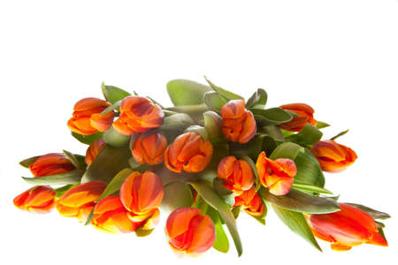 orange tulips bucket for easter and dutch queensday