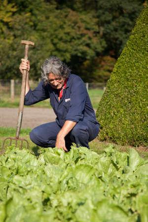 farmer inspecting his vegetabeles Stock Photo
