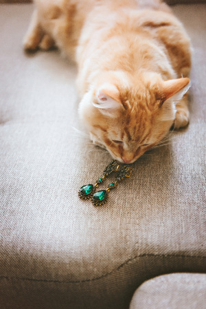 green gemstone: Earrings with green gemstone. Beautiful jewelry. Aged gold. The cat sniffs
