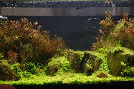 aquarium eau douce: Un bel aquarium tropical d'eau douce plant� Banque d'images