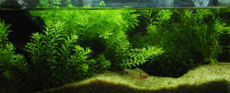 aquascaping: Green Banner of Fragment of the beautiful planted tropical freshwater aquarium and fish