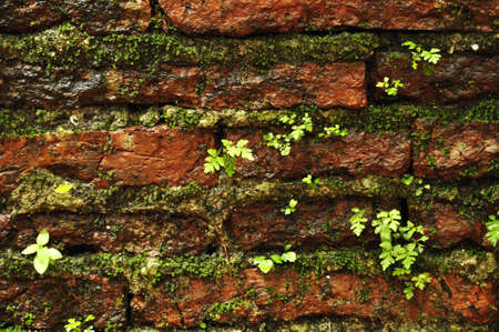 Brick and green plants photo