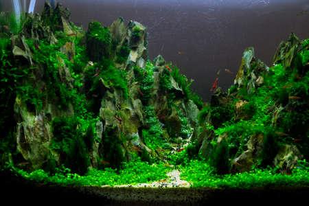 aquarium hobby: A beautiful planted tropical freshwater aquarium - aquascaping - miniature mountains  Stock Photo