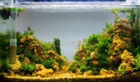pez pecera: Aquascaping del hermoso acuario de agua dulce tropical plantado Foto de archivo