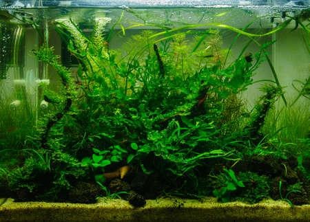 aquarium eau douce: Aquascaping de la belle aquarium d'eau douce tropicale plant�e Banque d'images