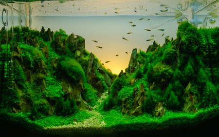 Aquascaping of the beautiful planted tropical freshwater aquarium Stock Photo - 25026607