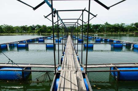 hatchery: Open water fish farm, symmetrical shot