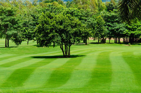 Freshly mown lawn and trees in a golf course photo