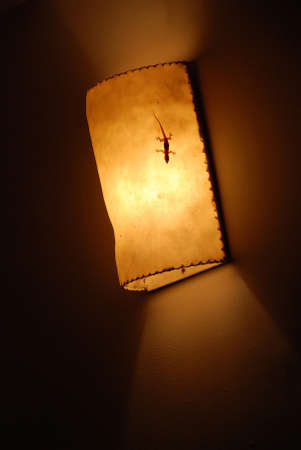 Gecko on Light from lamp on the wall  photo