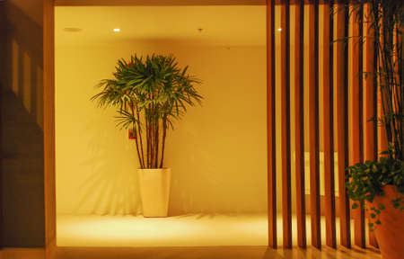 Corridor,houseplant and wooden wall with light and shadow photo