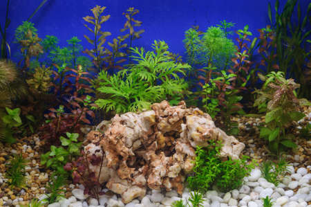 aquascaping: Fragment of the beautiful planted tropical freshwater aquarium Stock Photo