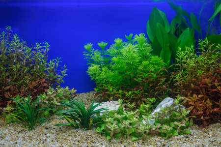 aquascaping: Aquascaping of the beautiful planted tropical freshwater aquarium Stock Photo
