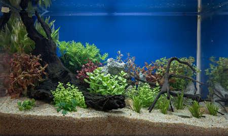 aquascaping: Aquascaping of the beautiful planted tropical freshwater aquarium Stock Photo