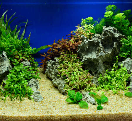 Aquascaping Of The Beautiful Planted Tropical Freshwater Aquarium Stock  Photo   75799364