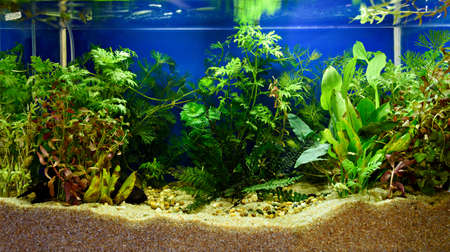 planted: Aquascaping of the beautiful planted tropical freshwater aquarium Stock Photo