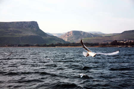 Seagull flies over Lake  Imagens