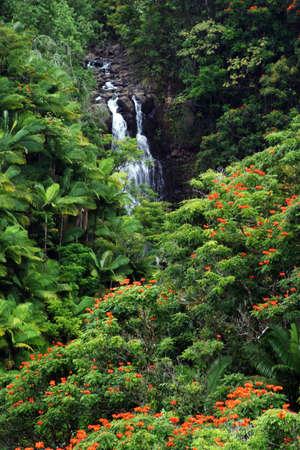 scene of waterfall