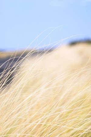 scene of Hay fields