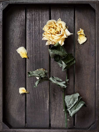 Yellow dried rose petals on wooden boards brown color Banco de Imagens - 87004933