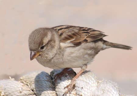 부스러기를 찾고있는 참새