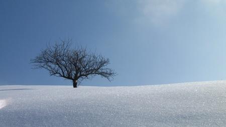 arbol de manzanas: �rbol joven, sola manzana en invierno Foto de archivo